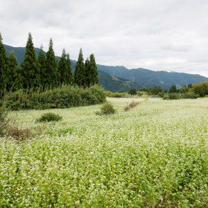 中山そば畑